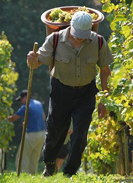 Alles über den Wein